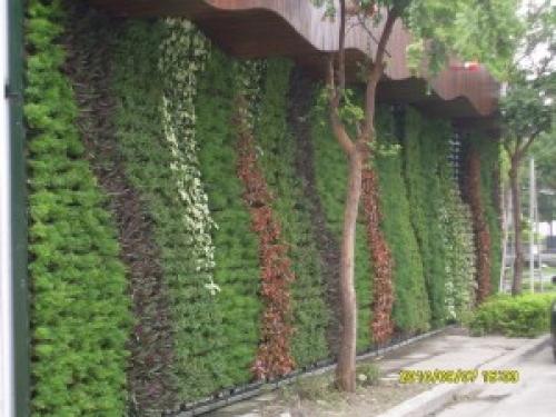 簡易綠圍籬